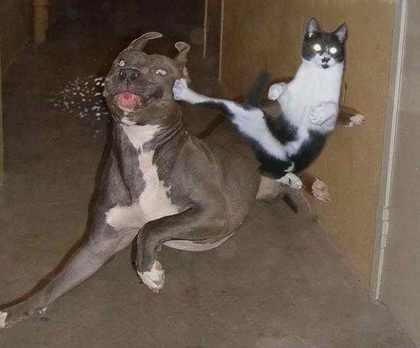 ninjacat28ov.jpg